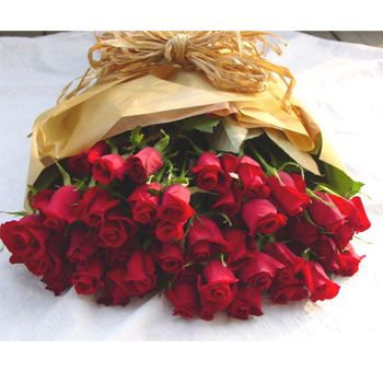 Rose rosse- Red roses