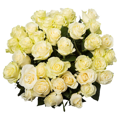Rose bianche- White roses