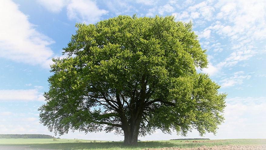 1030_LL_trees-1028x579_edited.jpg