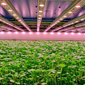 Perfectly Fresh expand their UK based vertical farming operations