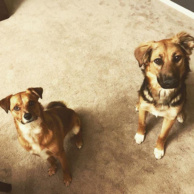 Nerds. @charliekoyle #dogsofinstagram