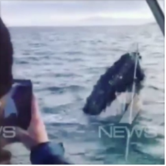 Rowey chats with Alan Marshall, who spotted a whale in Cape Jervis