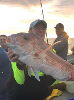 Snapper caught by Paul Cahill