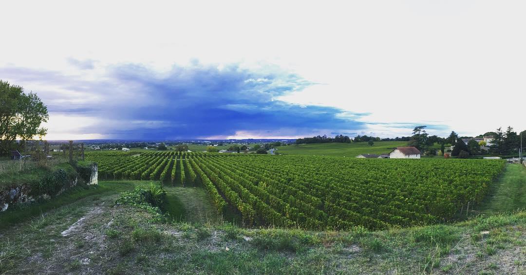Vignes de Saint-Emilion en 2019 - Magnifique appellation bordelaise faisant de superbe vin de Bordea