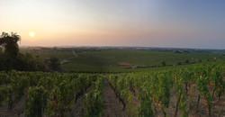 Vigne Bourguignone à Puligny-Montrachet en 2018 - Marc POTTIER - Cave Henri IV