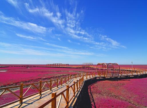 Gotta See It: China's Red Beach