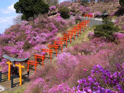Shiizaki Inari Shrine: A Hidden Gem