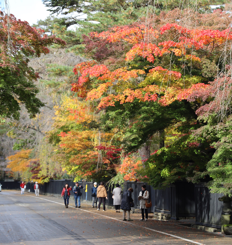 Kakunodate Samurai District Autumn