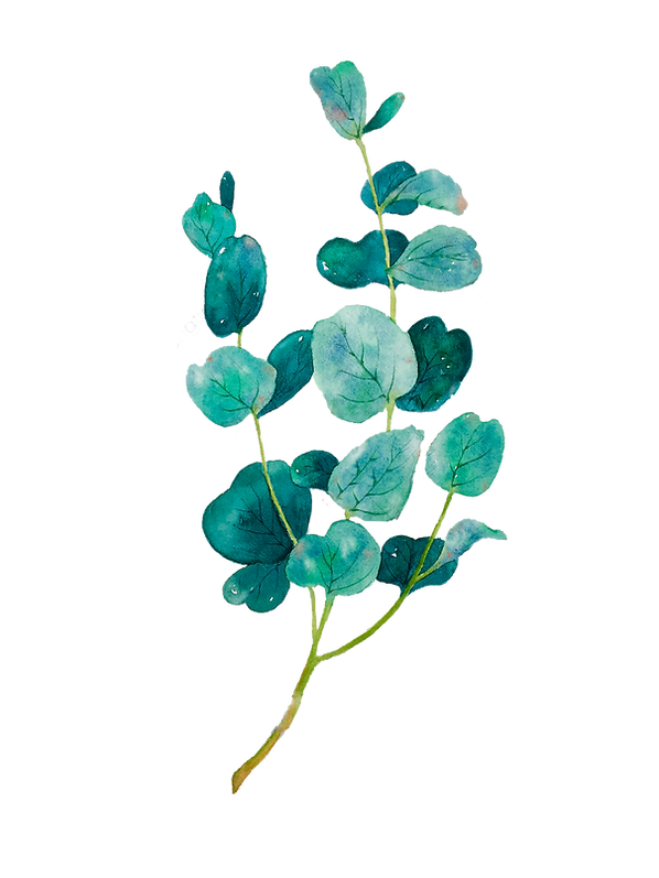 pngtree-plant-hand-drawn-plants-illustra