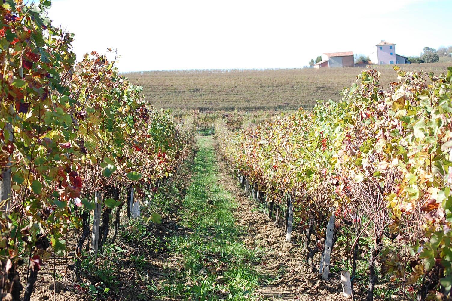 Le nostre vigne