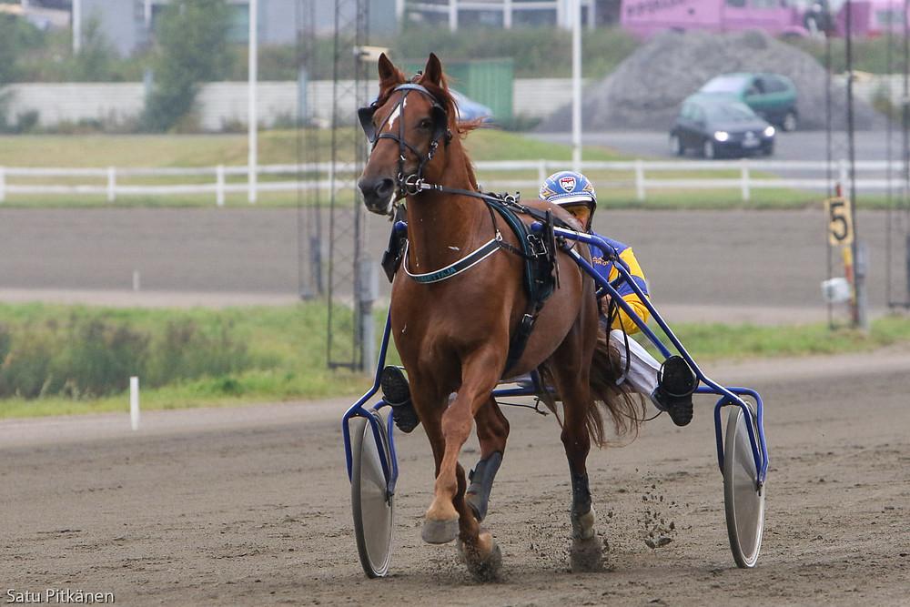 Derbyfinalisti Lumettaja, kuva Satu Pitkänen