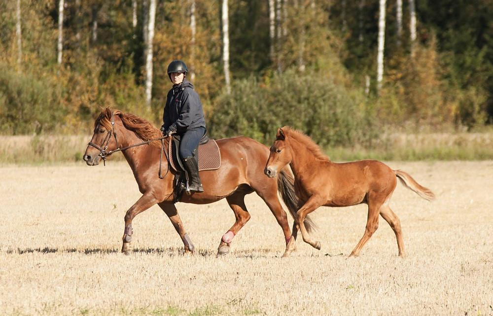 Elpan ja Epelin kanssa pellolla 2014
