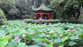 Il giardino botanico di Taipei