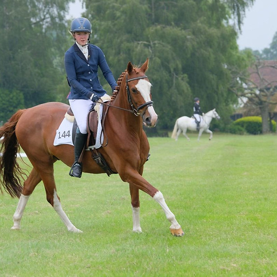 Dressage with Alison Short (1)
