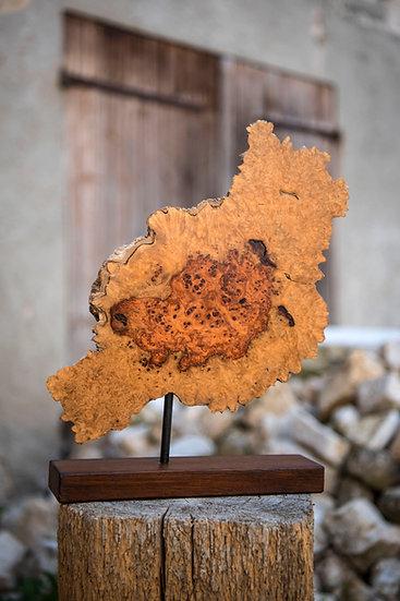 Edelholz, Baumscheibe