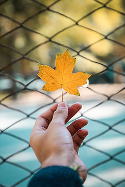 person-holding-a-maple-leaf-837269.jpg