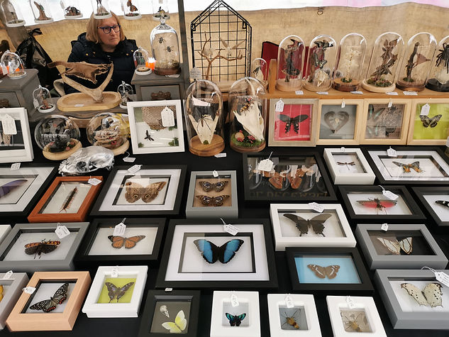 Entomology frames and displays that make up the bulk of my store