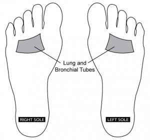 Reflexology Point: Lungs