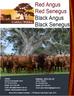 NEW KW BROCHURE - Red Angus, Red Senegus, Black Angus, Black Senegus