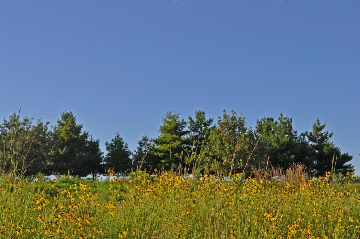 Maffitt Ridge (13)