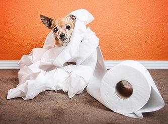 Housetraining-dog.jpg
