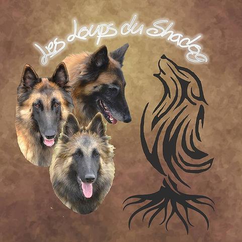 Les Loups du Shadog.jpg