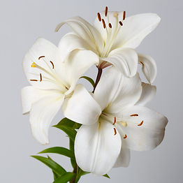 A bouquet of white lilies isolated on a