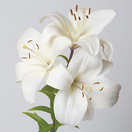 A%20bouquet%20of%20white%20lilies%20isol