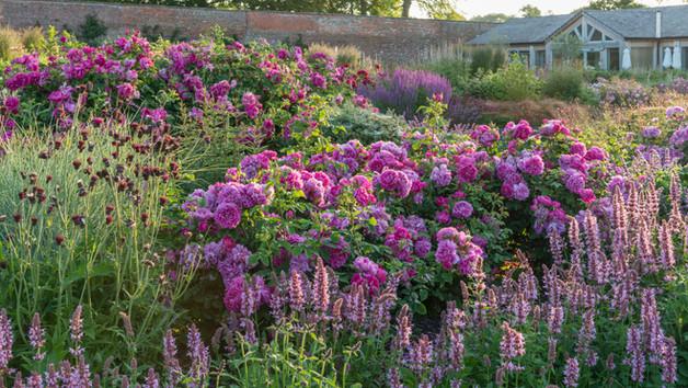 Wynyard Rose Garden