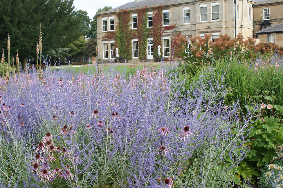 Colourful planting of Echinacea, Perovskia and Anemone, Filipendula at Bowcliffe Hall drifts of plants