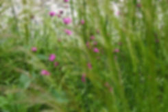 Contemporary modern roof garden, Dianthus carthusianorum, designed by Alistair Baldwin in Yorkshire