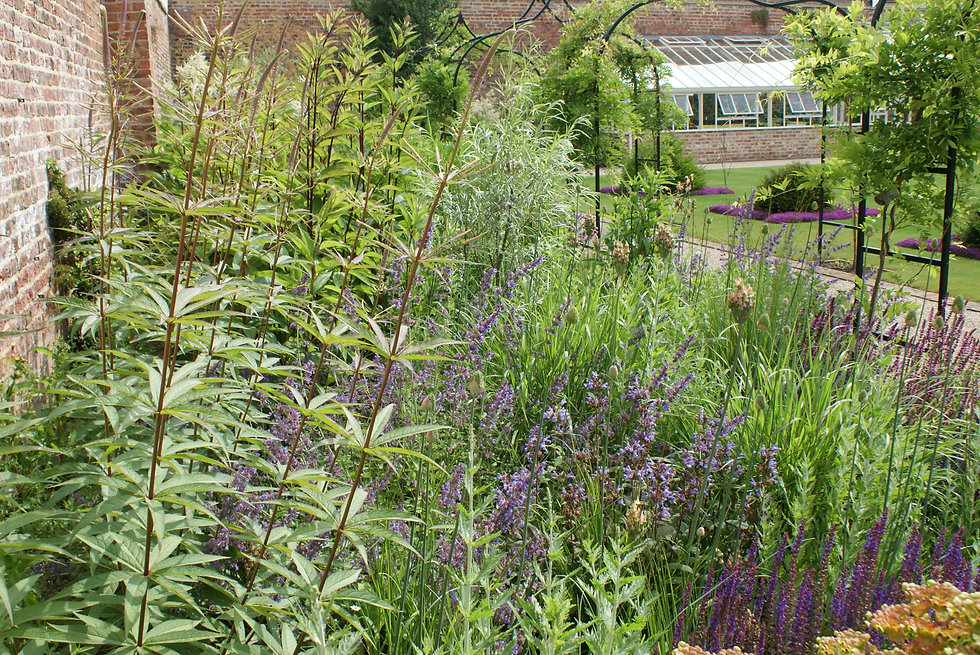 Swathes of perennial planting and new arched Wisteria path on walled garden yorkshire designed by Alistair Baldwin