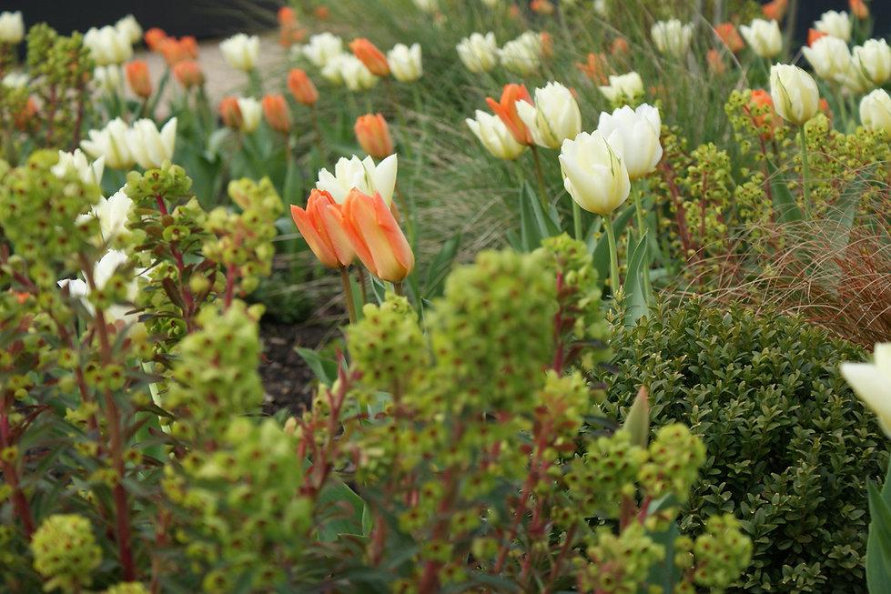 Mixed perennial and bulb planting