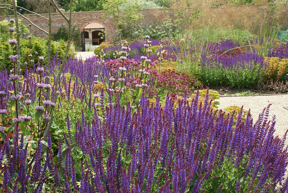 Colourful perennial planting in refurbished walled garden in Yorkshire designed by Alistair Baldwin