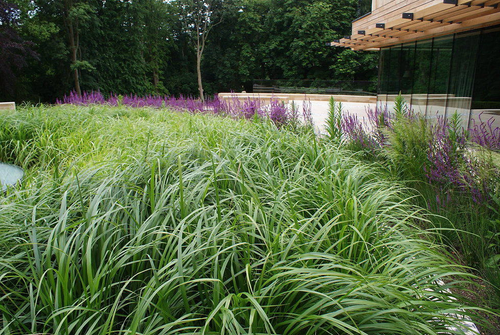 Contemporary and modern roof gaden, in Yorkshire, James Bond house, perennial planting