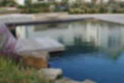 Natural pool surrounded by wooden decking and perennial plantng