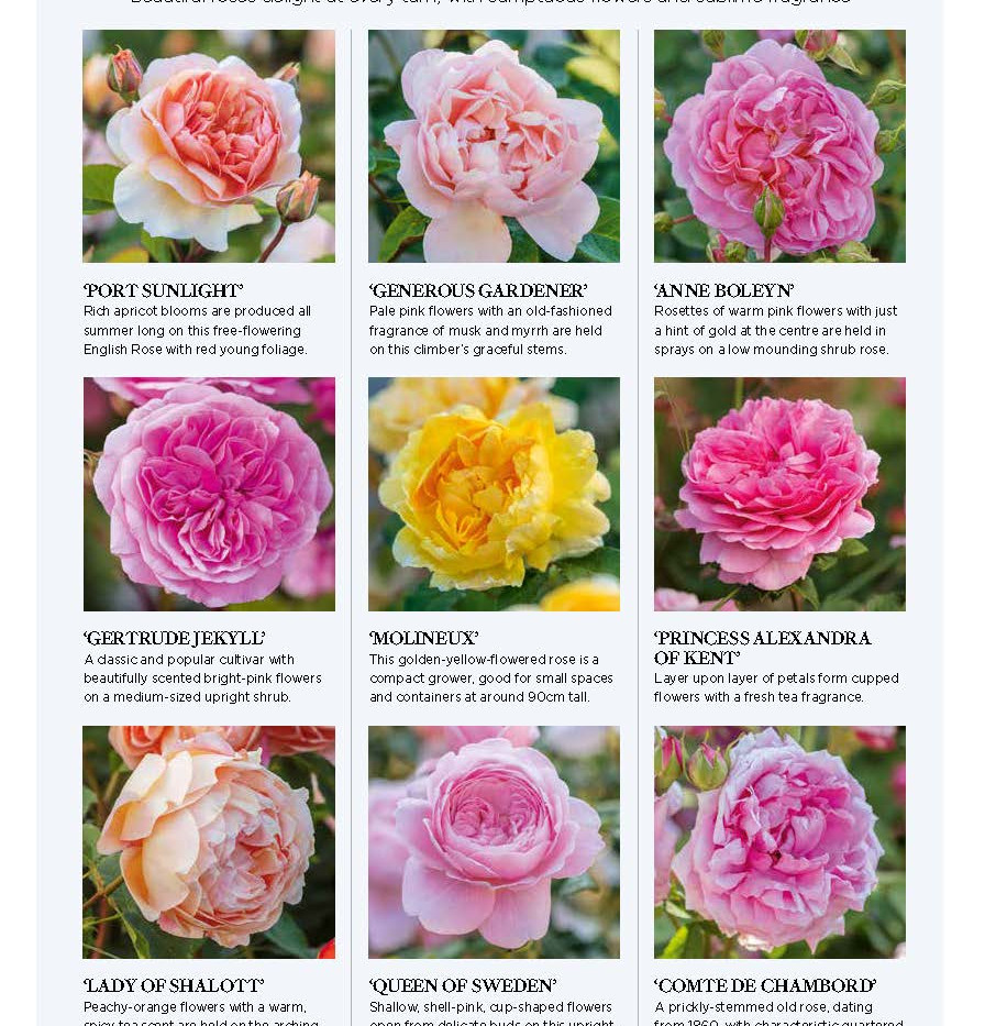 Wynyard Hall Rose Garden, designed by Alistair Baldwin, The English Garden Magazine, Page 5
