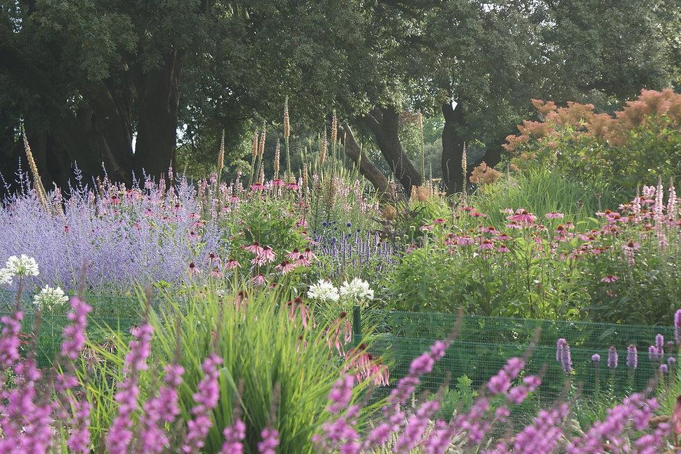 Swathes of perennial planting, including Perovskia, Echinacea, Agastache, Agapanthus