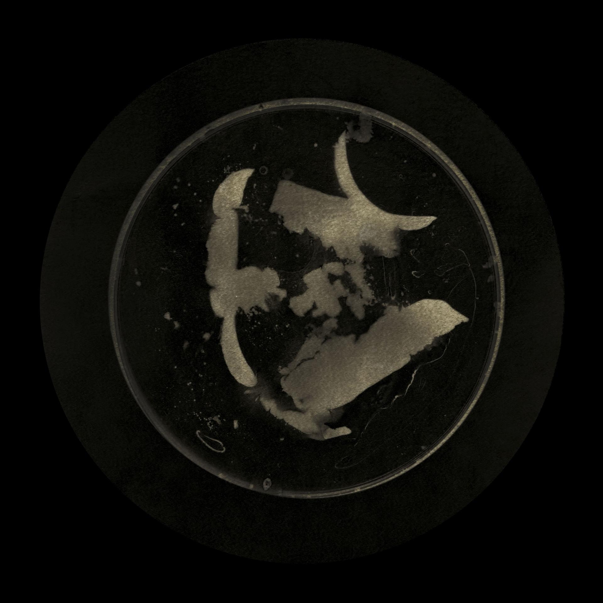 Covid Darkroom #2