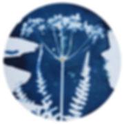 Cyanotype_3.jpg