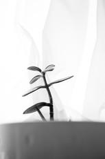 Plant - Week 4