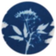 Cyanotype_01.jpg