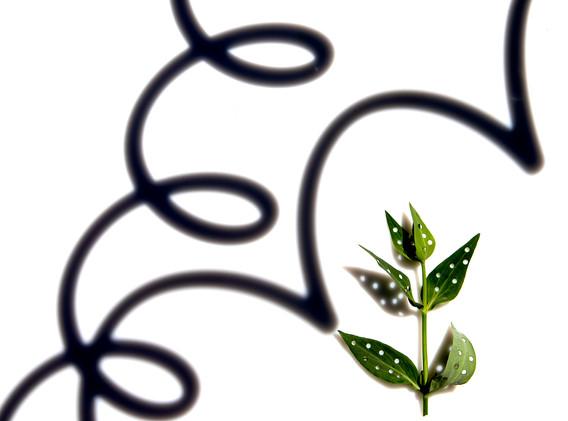 leaf spotting 7