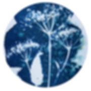Cyanotype_02.jpg