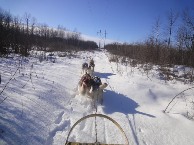 Out on the sled