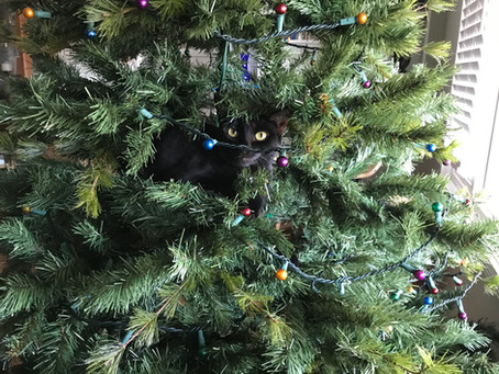 Christmas Tree VS Cats -- Dog Wins!