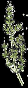 beve studio Oregano Herb Icon