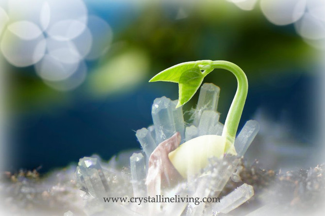 NEW YEAR, THE CRYSTALLINE NEW YOU