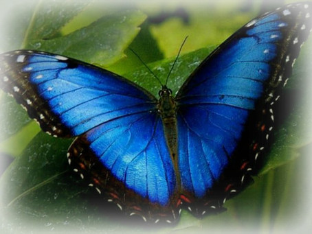 A Time of Transition - April Energy Insight