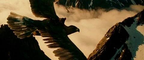 eaglesarecoming_edited_edited.jpg